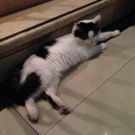 Indoor Cat