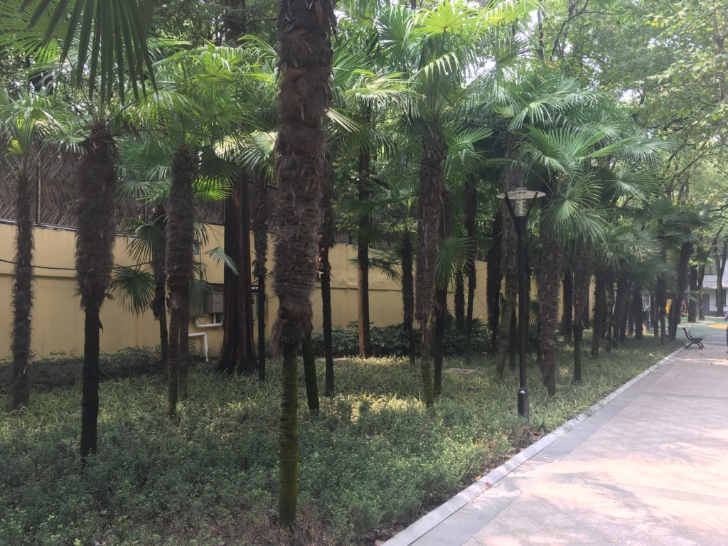 Arbour Trees